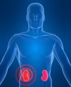 denervación renal denervación renal Denervación renal IMG 1940 247x300