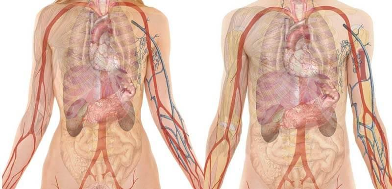 denervación renal denervación renal Denervación renal denervaci  n renal el poder de curar 治愈的力量 denervaci C3 B3n renal