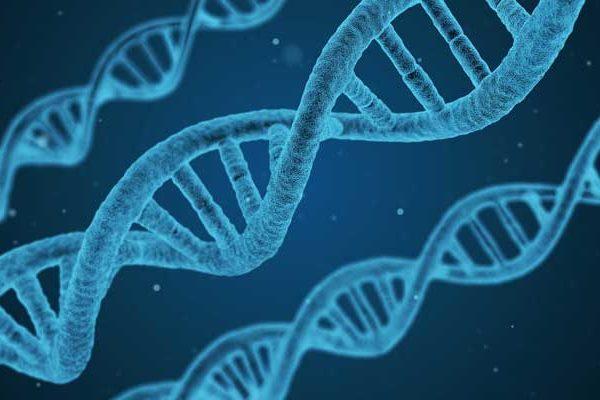 Genoma humano genoma Descifrando el genoma humano descifrando el genoma humano 600x400 instituto europeo Instituto Europeo de Salud descifrando el genoma humano 600x400