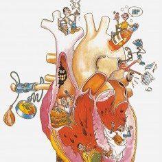 Cuidando el corazón