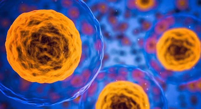 coronavirus Cuidando el corazón frente al coronavirus celulasmadreelpoderdecurar e1588232431615