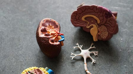 Ictus ictus Ictus: infarto y derrame cerebral robina weermeijer igwG8aIaypo unsplash