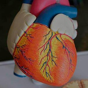 硕士学位 M  ster en cardiolog  a y patolog  a cardiovascular