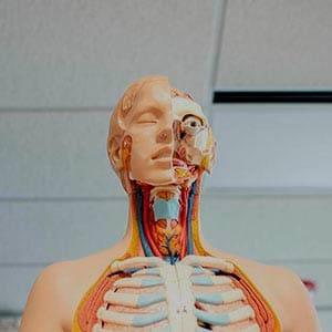MÁSTER EN MEDICINA INTERNA Máster M ster en medicina interna
