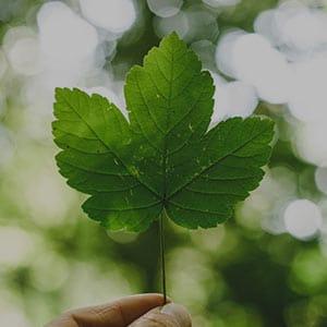 Máster Internacional en Salud Pública y Sostenibilidad Medioambiental Máster Master internacional en salud publica y sostenibilidad medioambiental 1