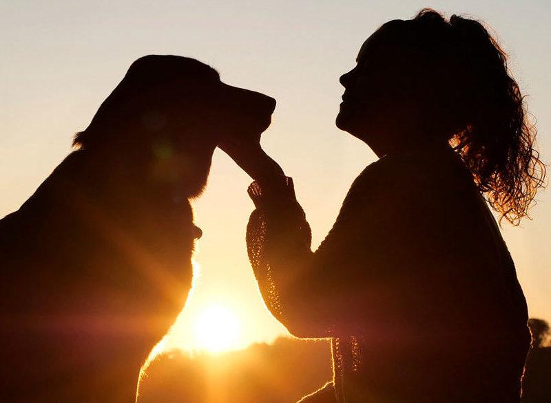 Beneficios de tener mascota para la salud beneficios Beneficios de tener mascota para la salud 11dog 4494554 1920 e1589791940875 800x586 Expert in Healthy Business Management 11dog 4494554 1920 e1589791940875 800x586