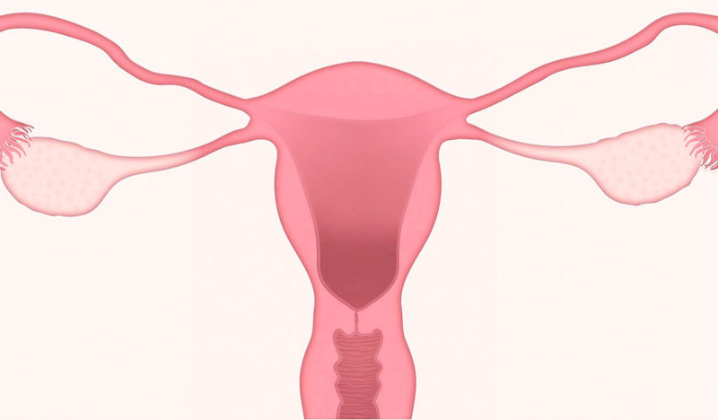 Menopausia: causas y consecuencias menopausia Menopausia: causas y consecuencias 111uterus 3777765 1920 800x468 Expert in Direction and Clinic Management 111uterus 3777765 1920 800x468