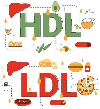 diferencia entre hdl y ldl